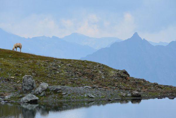 Wanderstudie 2019 I LO.LA Alpine Safety Management